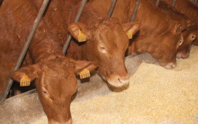 España solicita a la CE medidas de apoyo para el sector del vacuno de carne