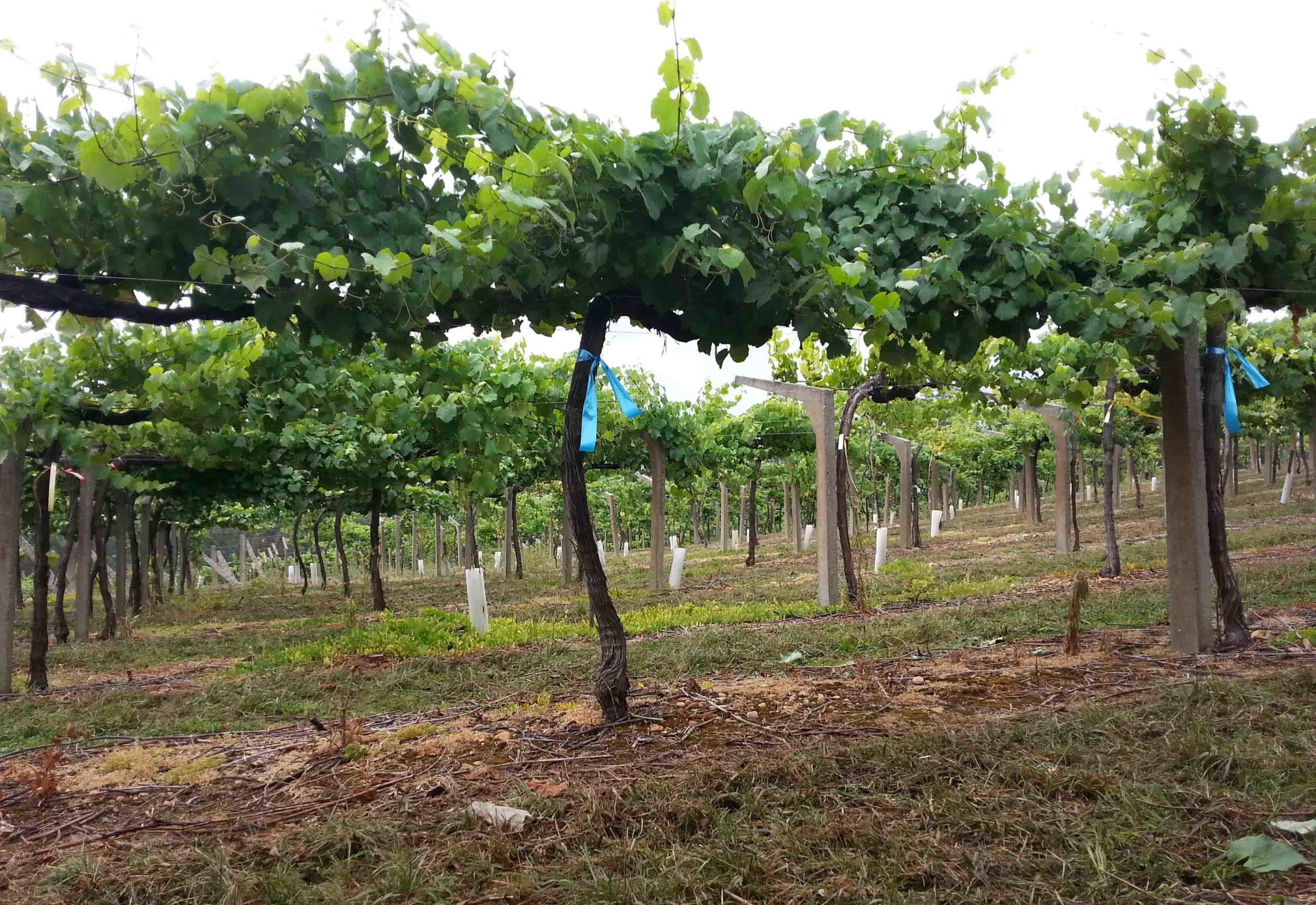 La transformación digital de las empresas del sector del vino, clave de cara a alcanzar una viticultura de precisión