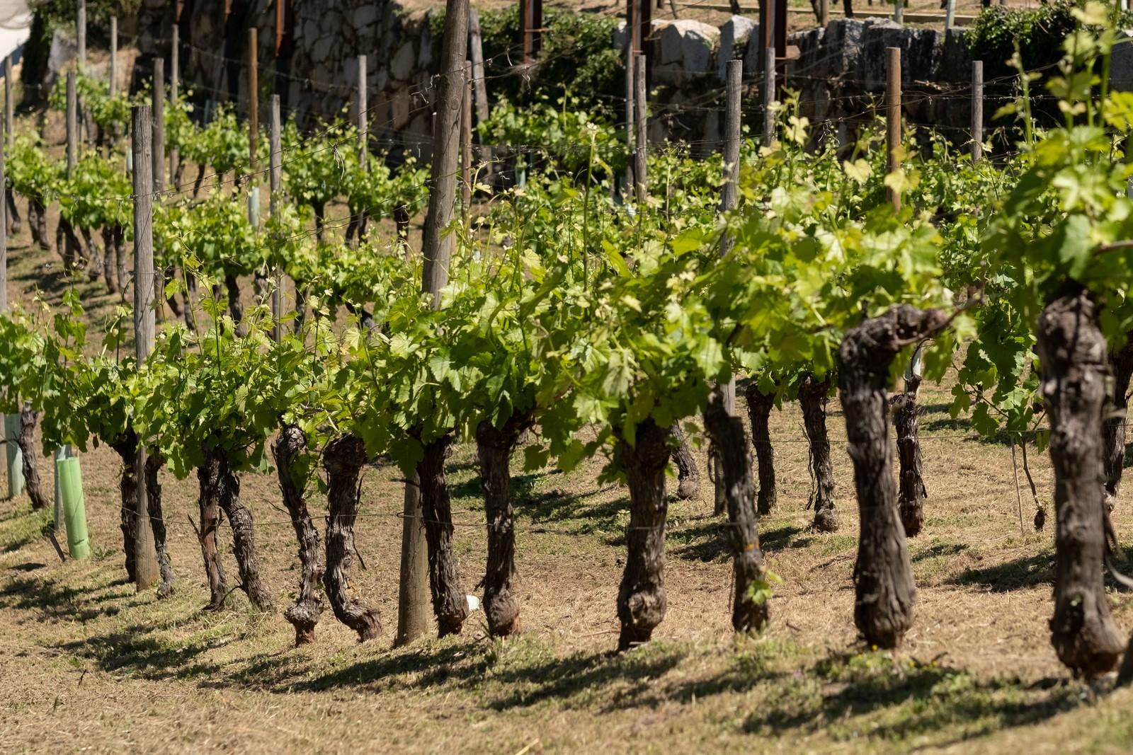 La Xunta invertirá 130.000 euros en la señalización de la Ruta do Viño Ribeira Sacra