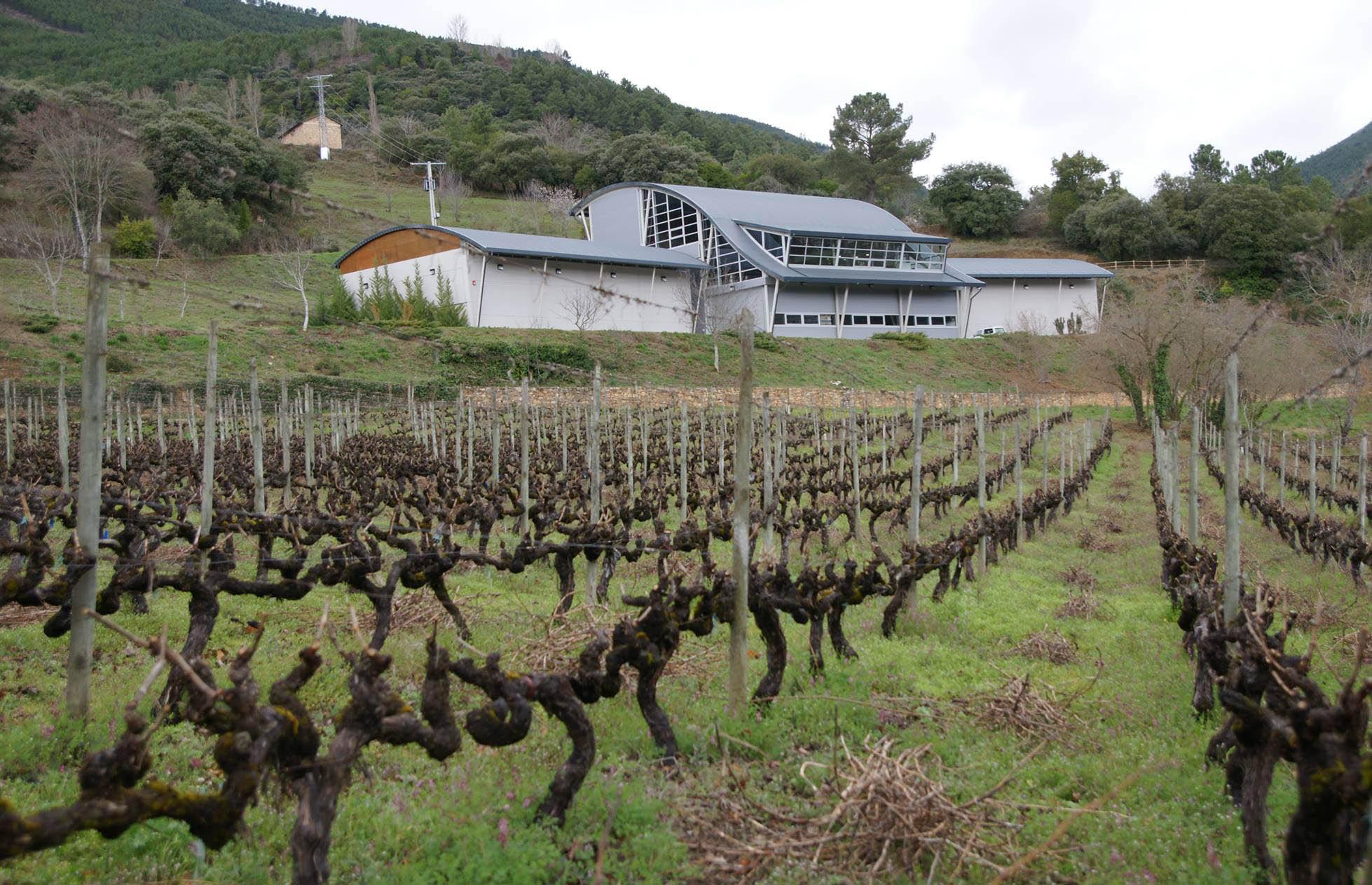 Godeval Cepas Vellas, único blanco español en el 'Top 100' de Wine Spectator