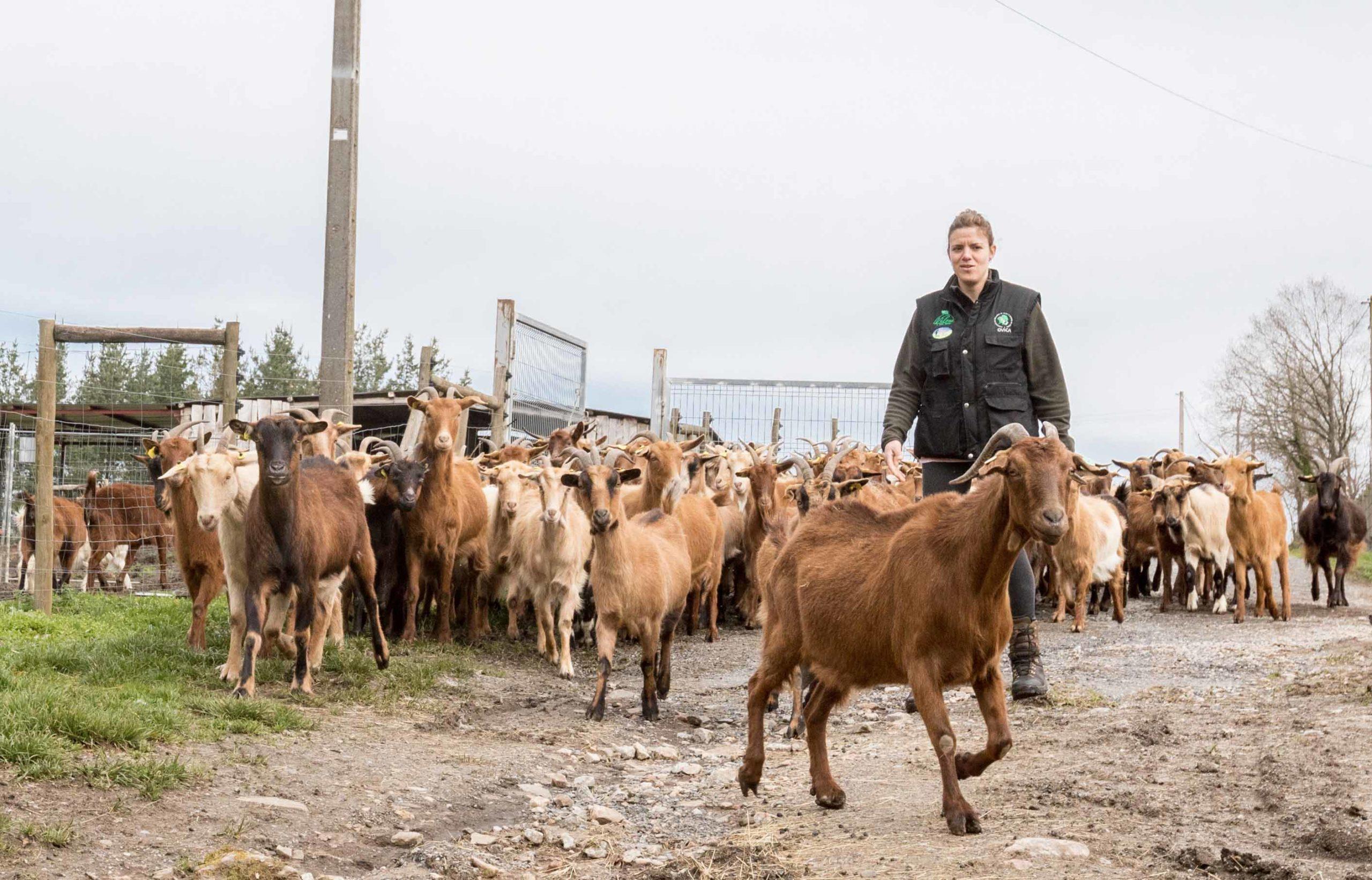 Medio Rural concede 200.000 euros a 10 asociaciones para el fomento de las razas autóctonas