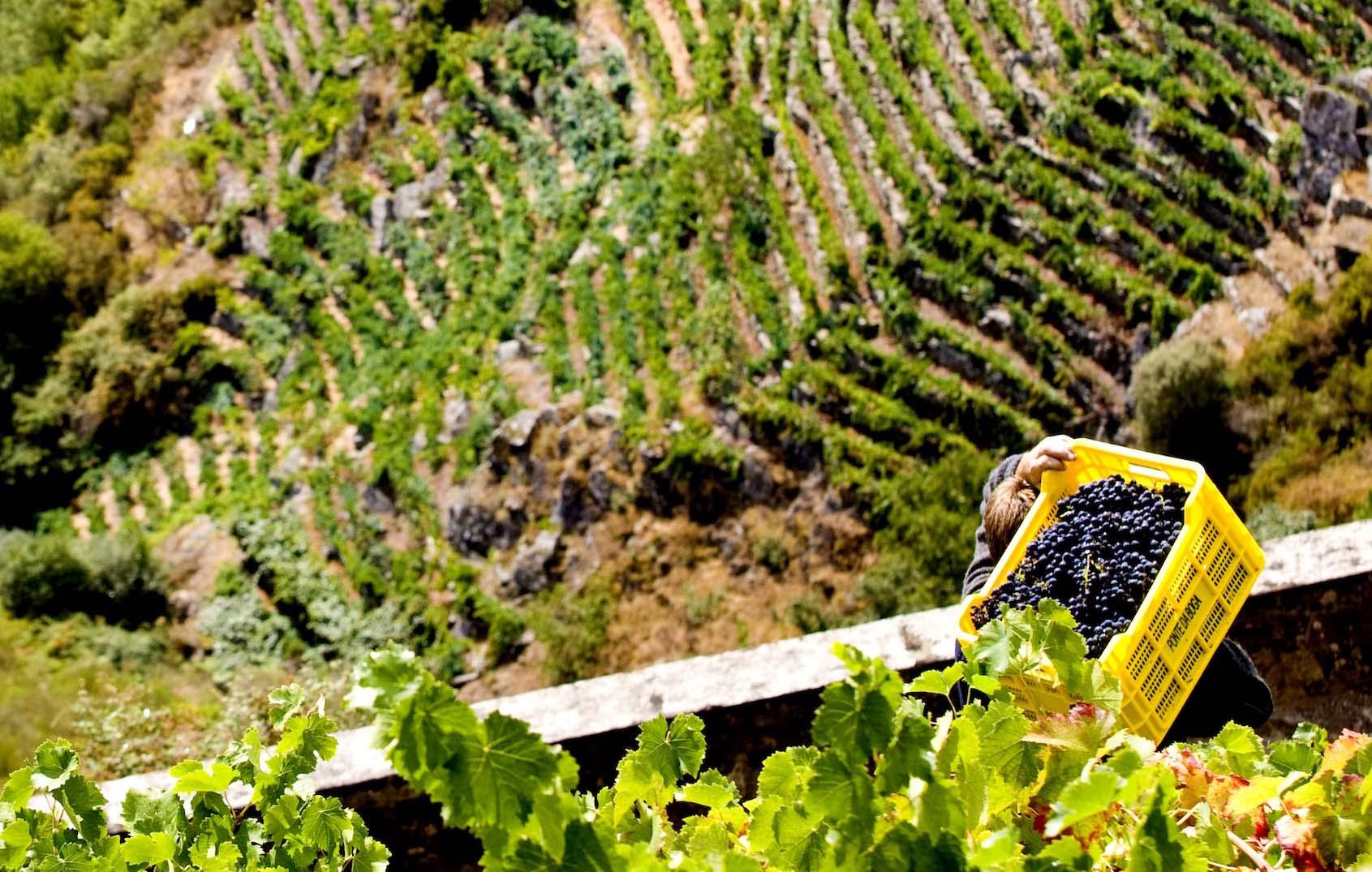 El Gobierno aprueba flexibilizar las medidas del Programa de Apoyo al Sector del Vino