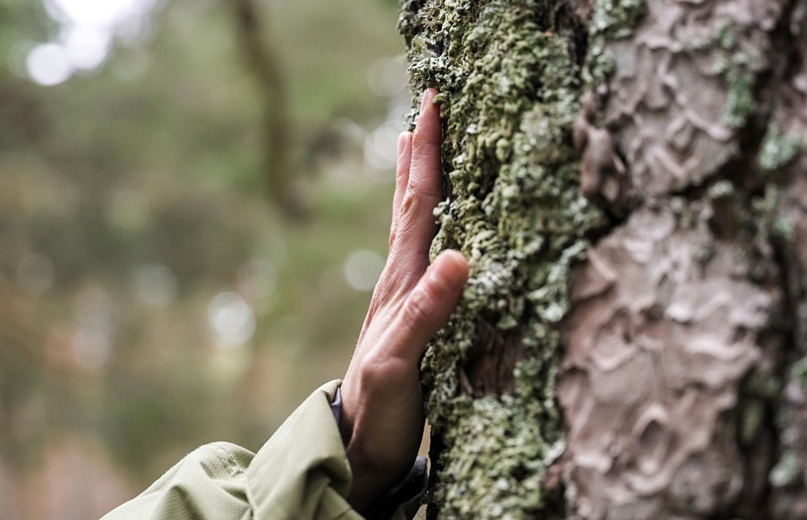 Cabreiroá se une a WWF España para restaurar un paisaje gallego afectado por incendios recurrentes