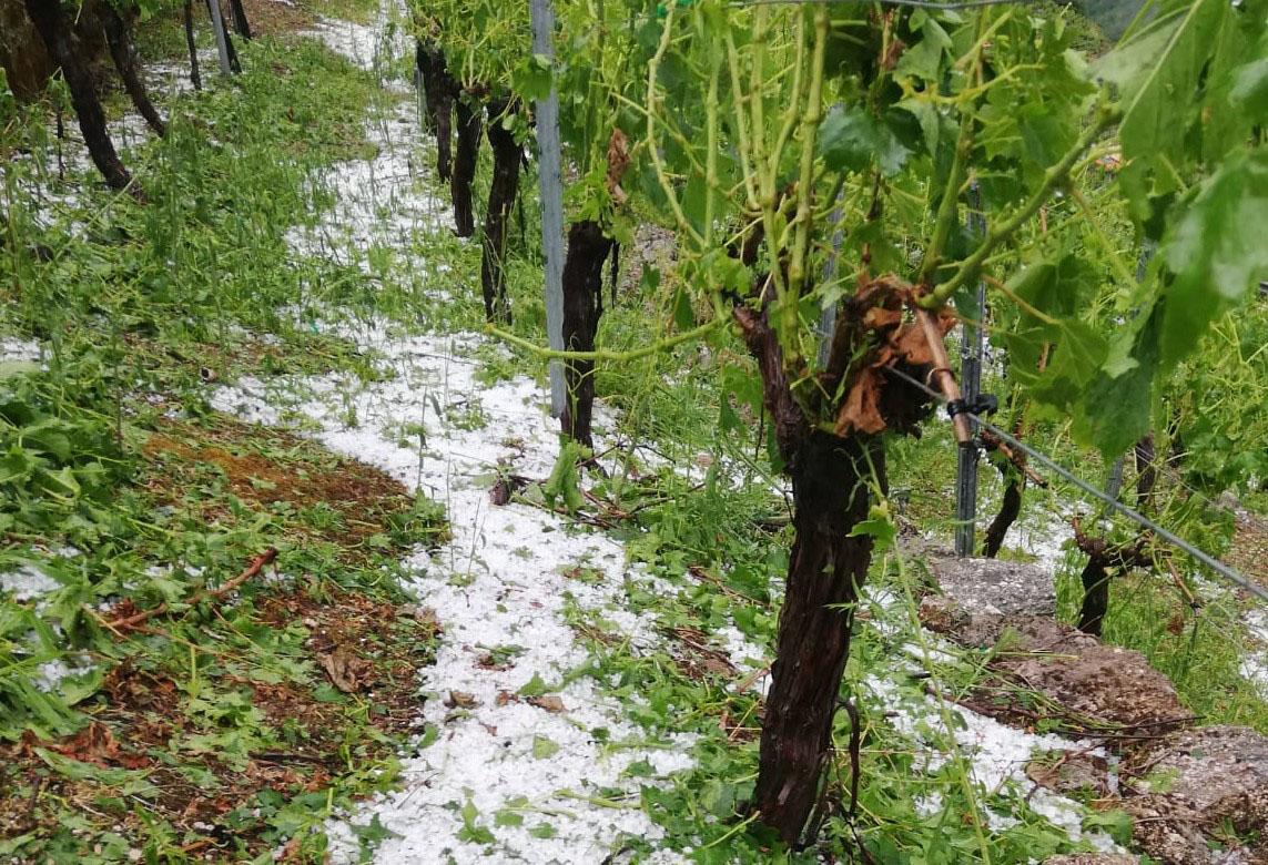Gravísimas pérdidas por el temporal en la Ribeira Sacra