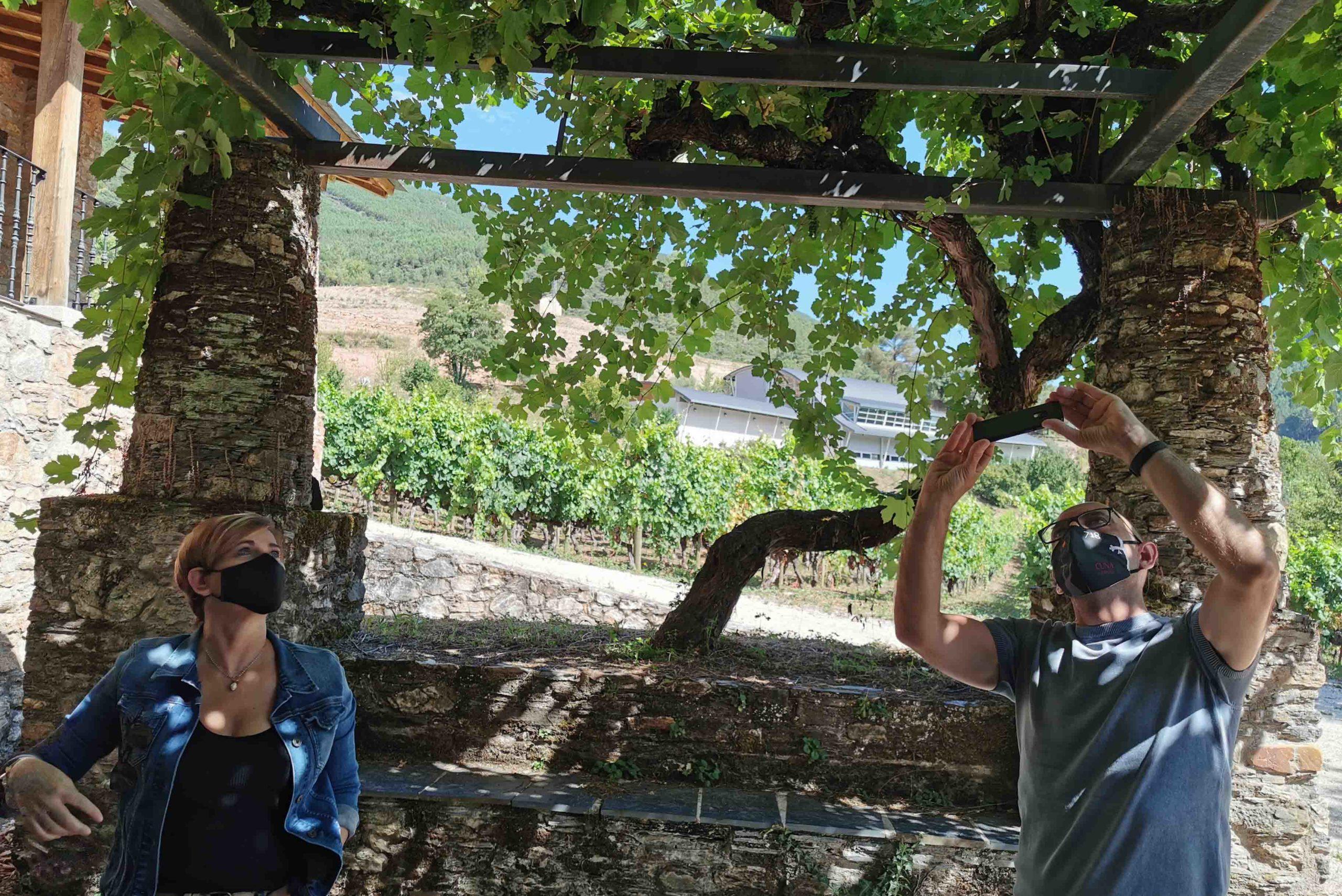 Godeval prepara visitas enoculturales y catas para las Jornadas de Puertas Abiertas de Valdeorras